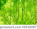 新鮮的綠色 49936087