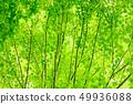 新鮮的綠色 49936088