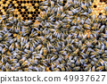 Honey bee beehive Wax Frame with hundrets of bees working 49937627