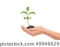 Little render of plant growing in a woman hands 49946629