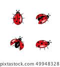 set of red ladybug isolated on white 49948328