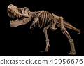 Tyrannosaurus Rex skeleton on isolated background 49956676