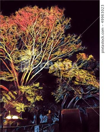 秋天的樹 49963023