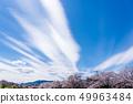 Row of cherry blossom trees in Hachioji Minami Asakawa overlooking Mt. Takao 49963484