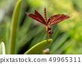 紅色蜻蜓關閉 49965311