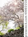 櫻花和石垣 49965550