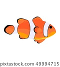 Clown fish. Amphiprioninae icon isolated on white 49994715