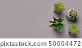 Different succulents and cactus in pots on grey background 50004472