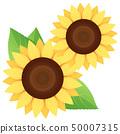 sunflower 50007315