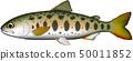 산천어 (아메고, 사쯔키마스) 일러스트 벡터 50011852