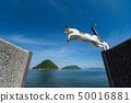고양이 점프! 50016881