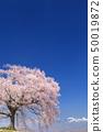 เทือกเขา Yatsugatake_Waniwaka Sakura 50019872