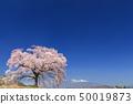 เทือกเขา Yatsugatake_Waniwaka Sakura 50019873