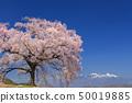 เทือกเขา Yatsugatake_Waniwaka Sakura 50019885
