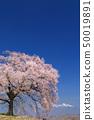 เทือกเขา Yatsugatake_Waniwaka Sakura 50019891