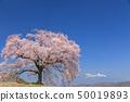 เทือกเขา Yatsugatake_Waniwaka Sakura 50019893