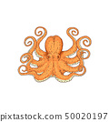 Hand drawn designed yellow sea octopus element for label and poster template. 50020197