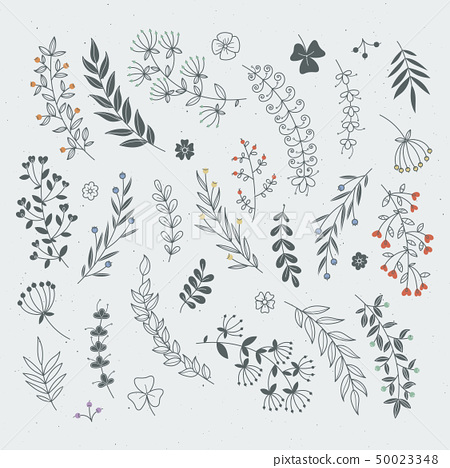 Decorative floral elements for design projects. Rustic branches and leaves hand drawn illustration 50023348