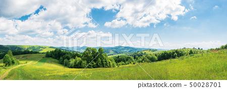 panorama of beautiful countryside in summer 50028701