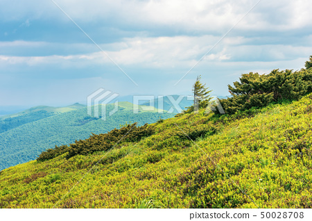 tree on the grassy slope in mountains 50028708