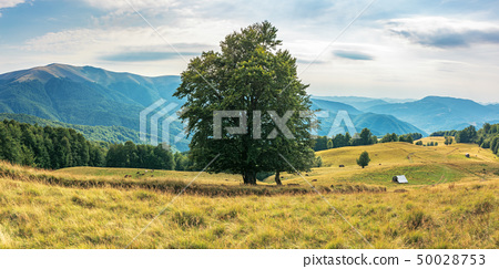 wonderful mountain landscape in late summer 50028753