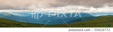 panorama of a gorgeous summer landscape 50028772