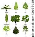 Vector set of green garden trees. Nature illustrations isolate on white 50033080