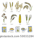 Colored illustrations of cereals. Vector pictures in hand drawn style 50033284