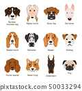 Different dogs. Vector illustrations set isolate on white 50033294