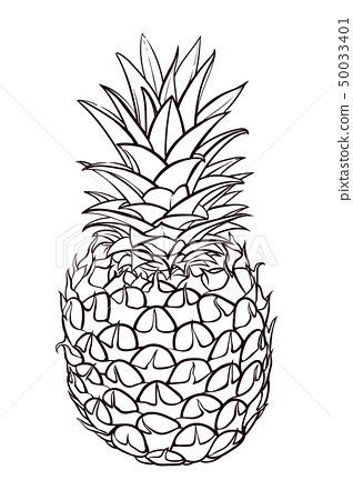 Hand drawn illustration of pineapple. Vector picture 50033401