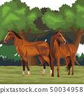 horse icon cartoon 50034958