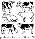 Black and white cows vector set 50039670