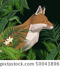 Fox in the jungle over black backgroud 50043896