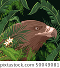 Eagle in the forest 50049081