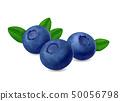 Blueberry isolated on white background. Realistic illustration 50056798