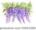 Wisteria flower 19422 pix 7 50062080