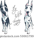 vector spotted dog Great Dane breed 50063799
