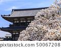 닌 나지 御室桜 50067208