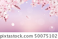 Blossoming light pink sakura flowers 50075102