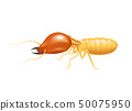 termite insect, termite isolated on white 50075950