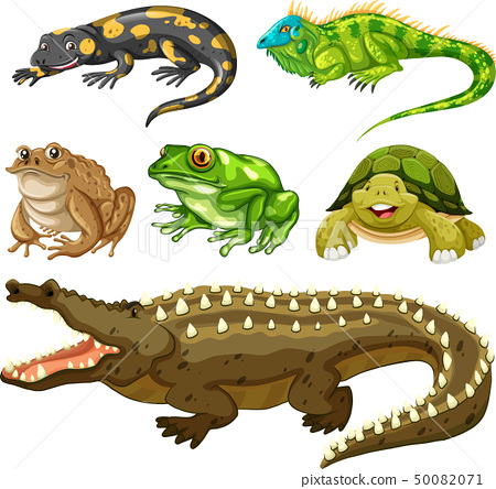 Set of reptile animal 50082071