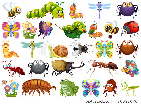 Set of insects white background 50082076