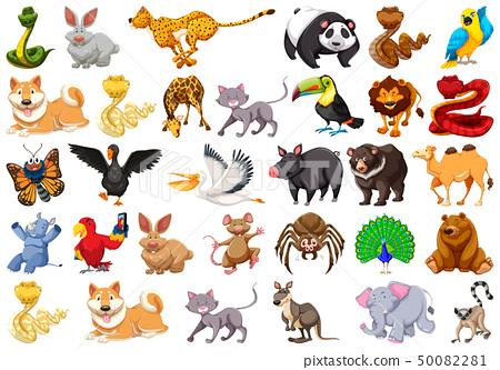 large set of animals 50082281