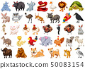 Set of wild animal 50083154