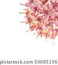 Pink flowers Gambier extracts plants watercolor botanical illustrations. 50095156
