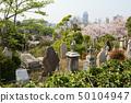 橫濱·山手櫻 50104947