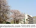 橫濱·山手櫻 50105105
