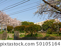 橫濱·山手櫻 50105164