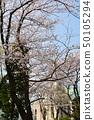 橫濱·山手櫻 50105294