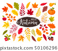 autumn leaves collection 50106296
